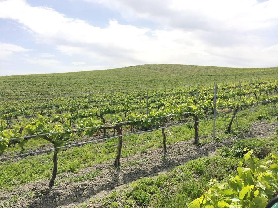 bodega de vinos en cordoba