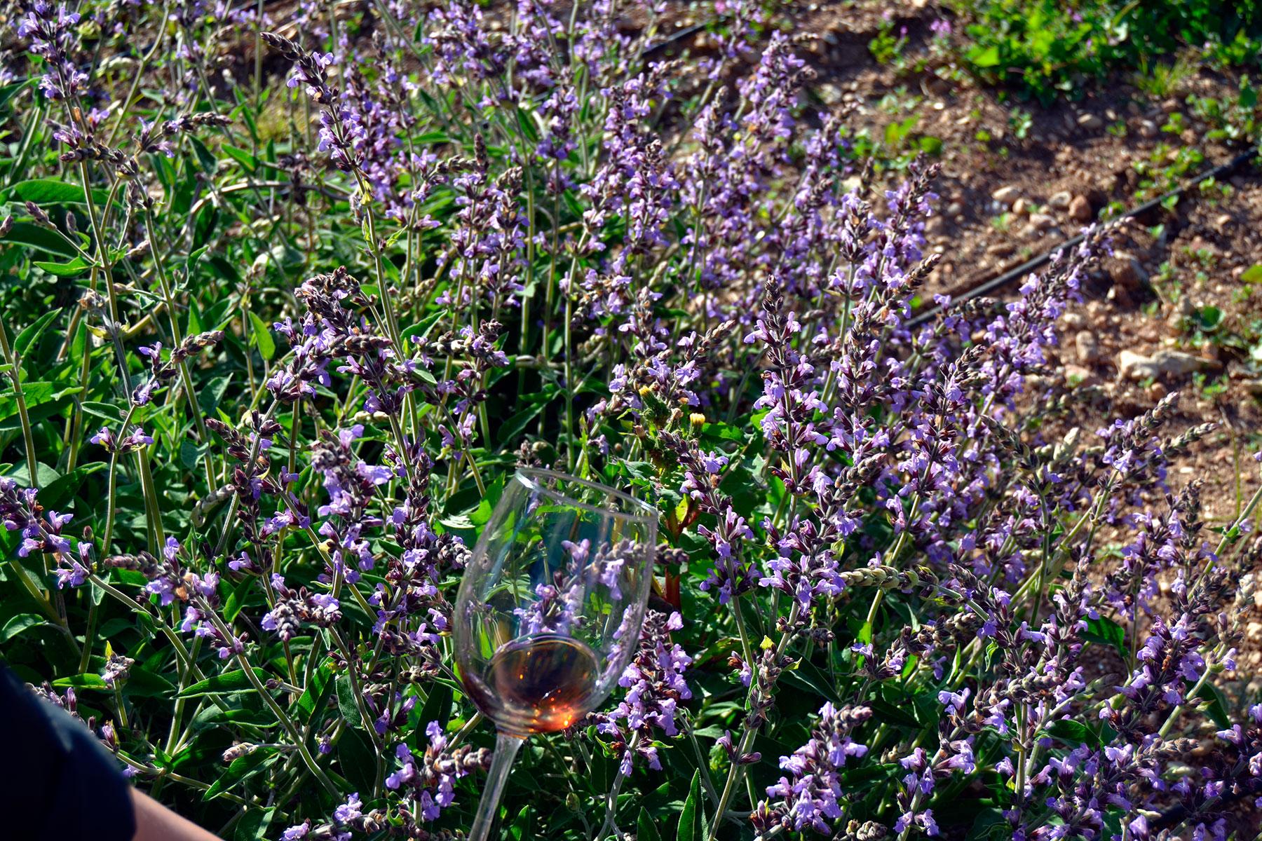 #elorigen. Visita a la huerta de Susana y Fran (Cabra), Subbética Ecológica