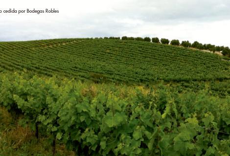 Reportaje: los vinos ecológicos en España