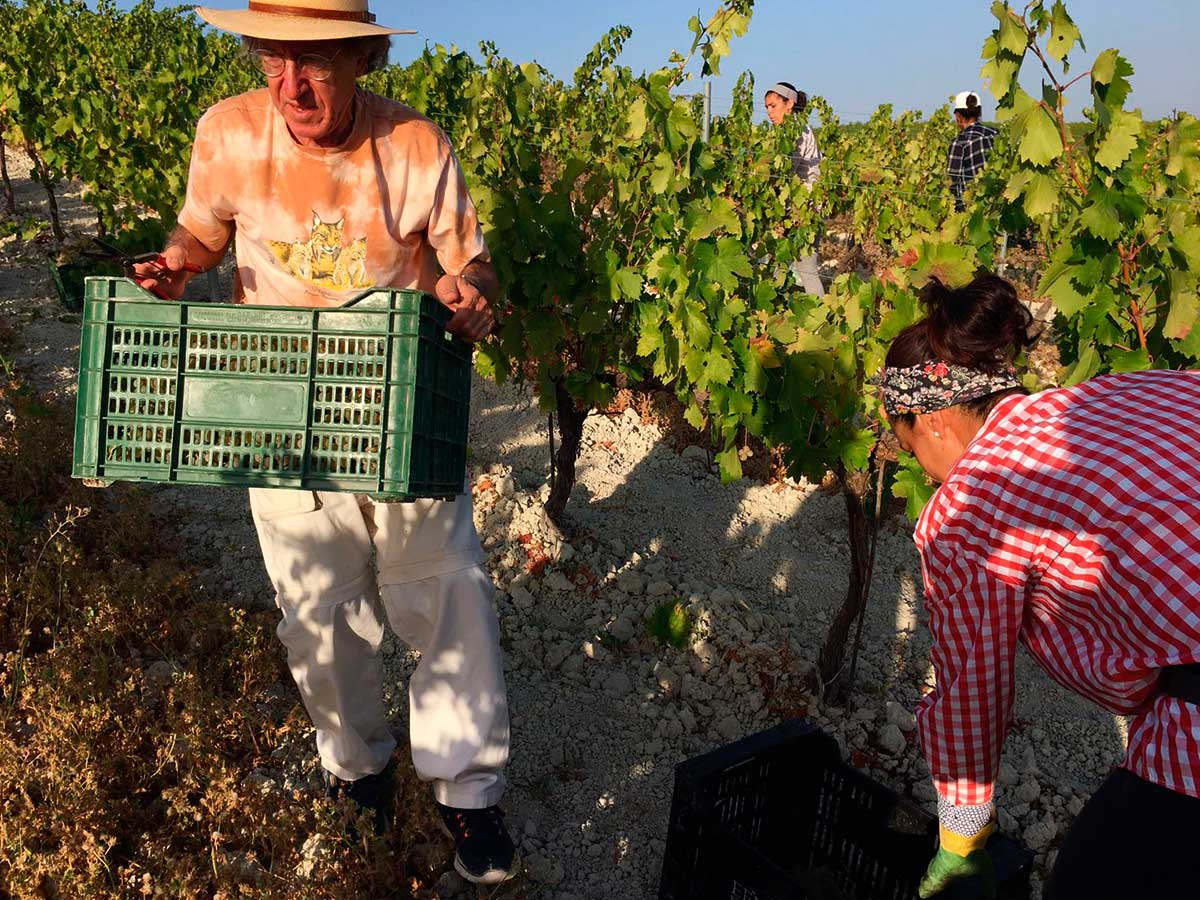 Ezequiel Martínez comparte una jornada de vendimia en el viñedo Villargallegos de Bodegas Robles