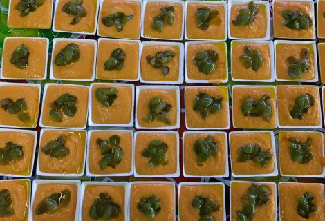 #elorigen. Salmorejo de mango con tartar de uvas y lavanda