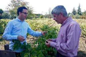 La hoja de vid ecológica de Bodegas Robles será comestible en la nueva carta del Restaurante Noor de Paco Morales