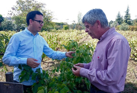 The organic vine leaf from Bodegas Robles will be eaten at Noor Restaurant