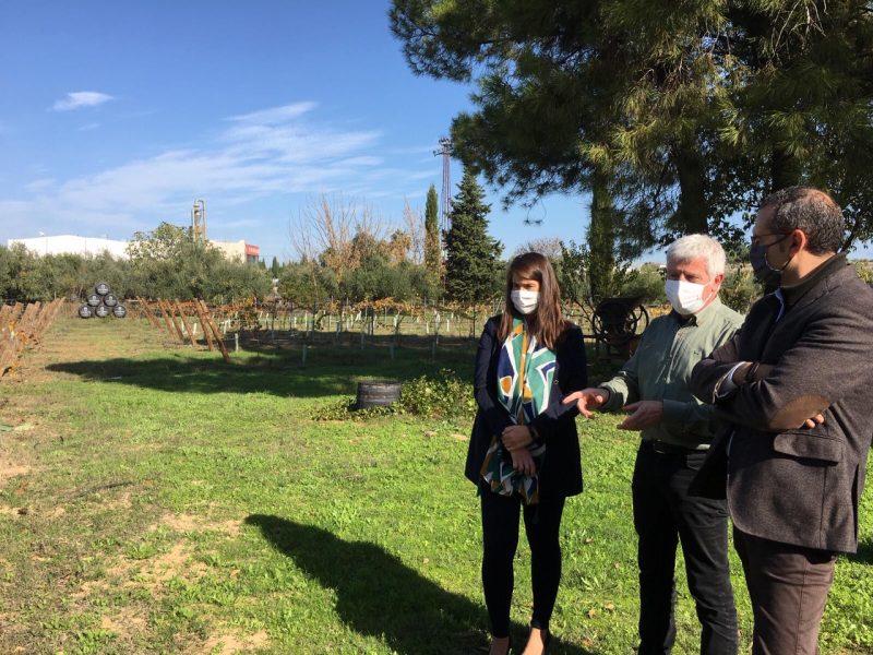 La delegada de Agricultura, Araceli Cabello, conoce de primera mano los proyectos de I+D en Bodegas Robles de Montilla