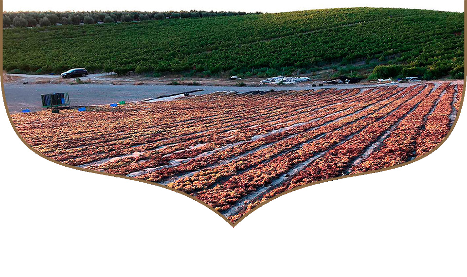 organic reductions bodegas robles
