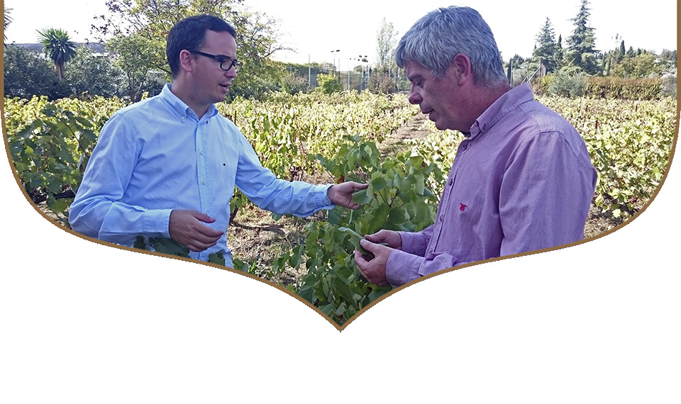 food agraz verjus andalusi paco morales bodegas robles