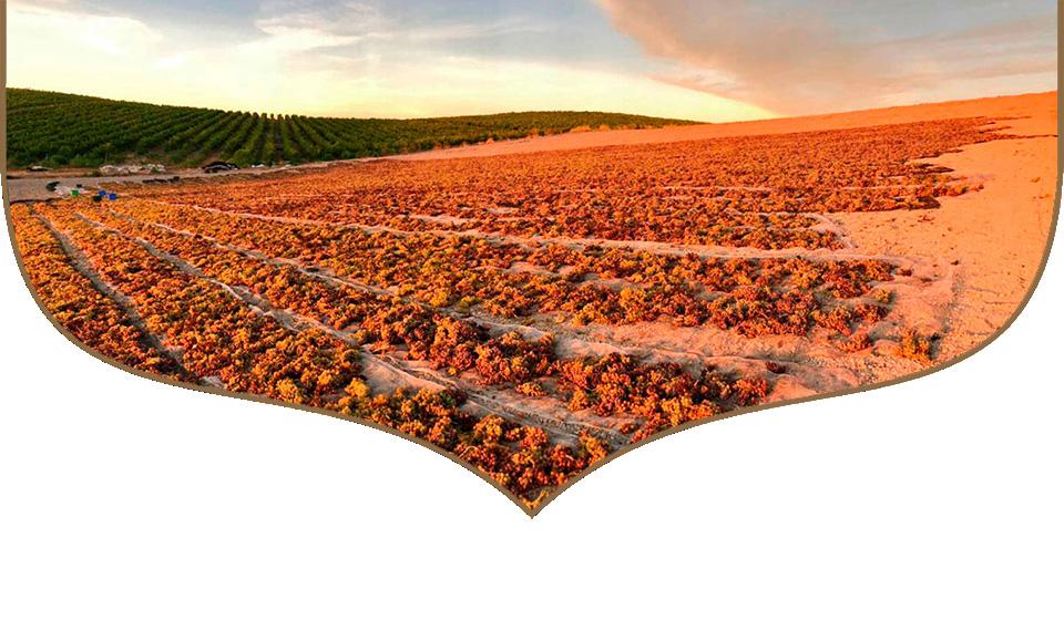 vinagres ecologicos pedro ximenez bodegas robles