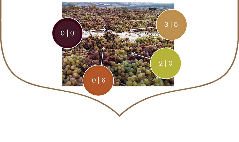 vinos ecologicos bodegas robles