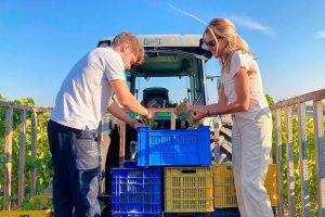 Comienza la vendimia ecológica en Montilla-Moriles